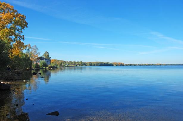 Рыбы прудов и озер